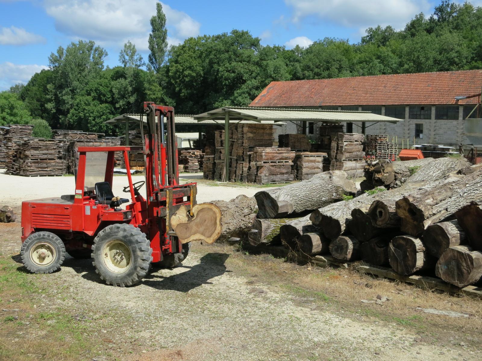 Selecting walnut trunks
